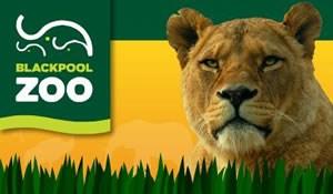 Year 1 Amp Year 2 Trip To Blackpool Zoo St Brendan S Rc